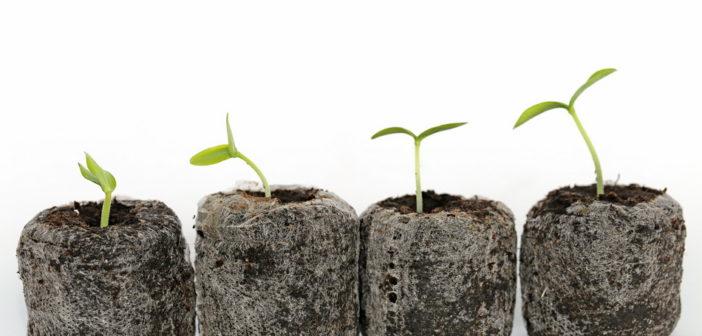 Jakie są zastosowania torfu ogrodniczego?