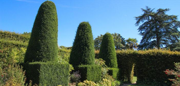 Zielone ogrodzenia, dlaczego warto sadzić żywopłoty