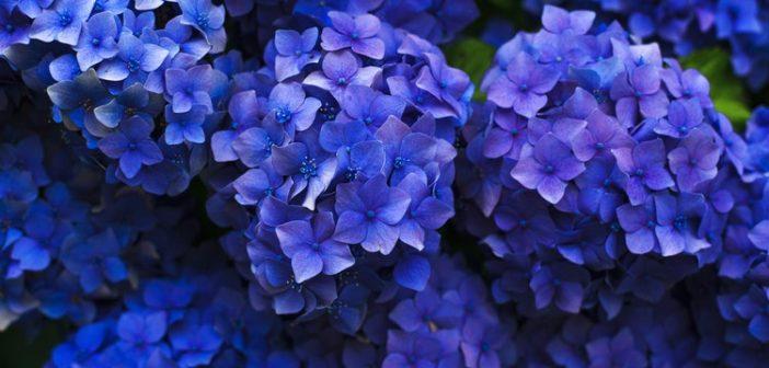 Jak prawidłowo wysiewać kwiaty?